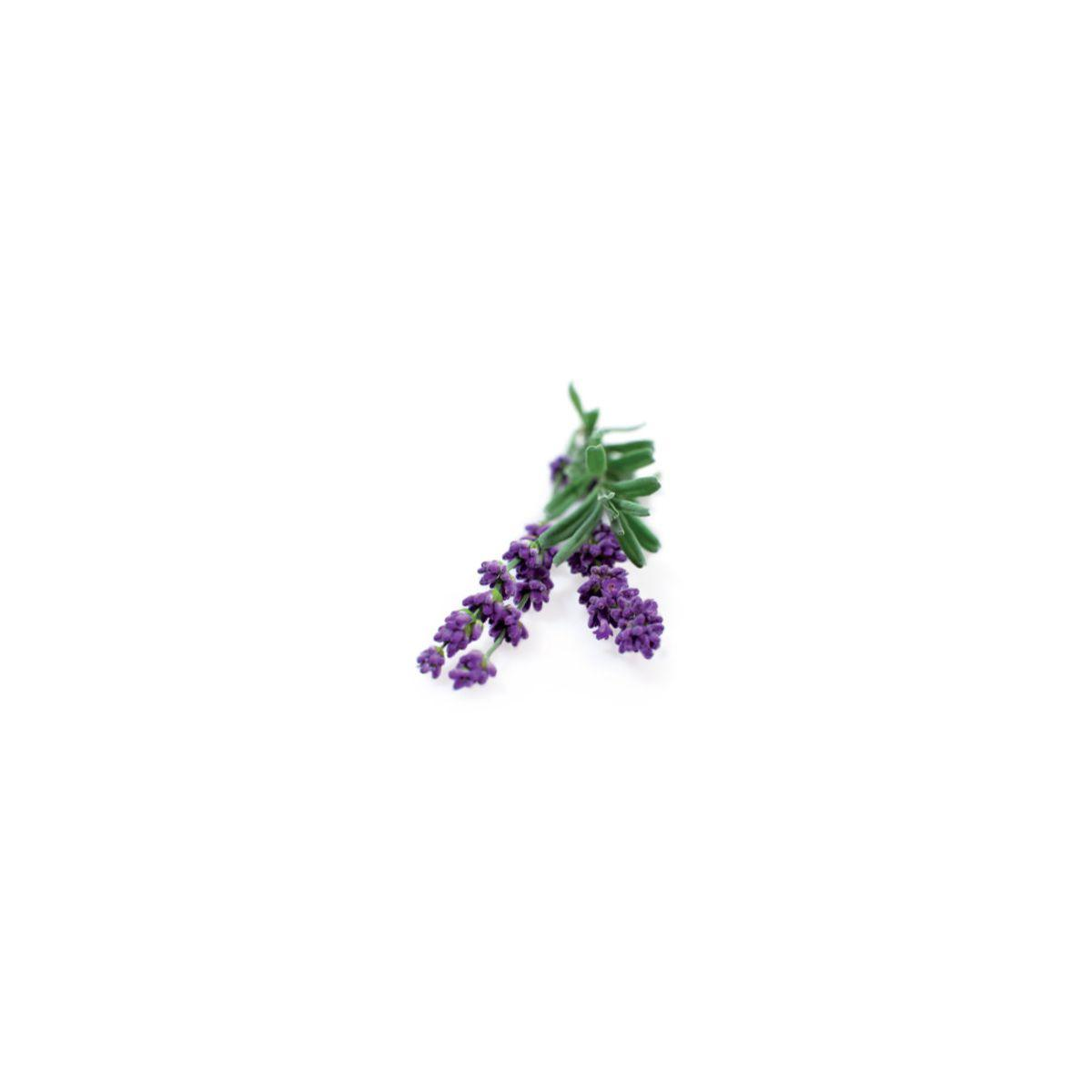 Recharge click and grow lavande (lot de 3) - 10% de remise imm�diate avec le code : priv10 (photo)