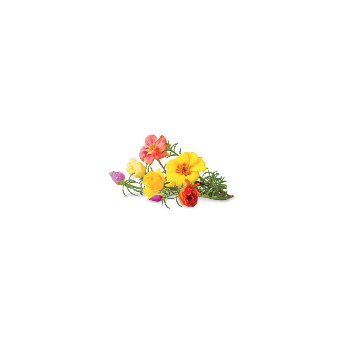 Recharge click and grow rose (lot de 3) - 10% de remise imm�diate avec le code : priv10 (photo)