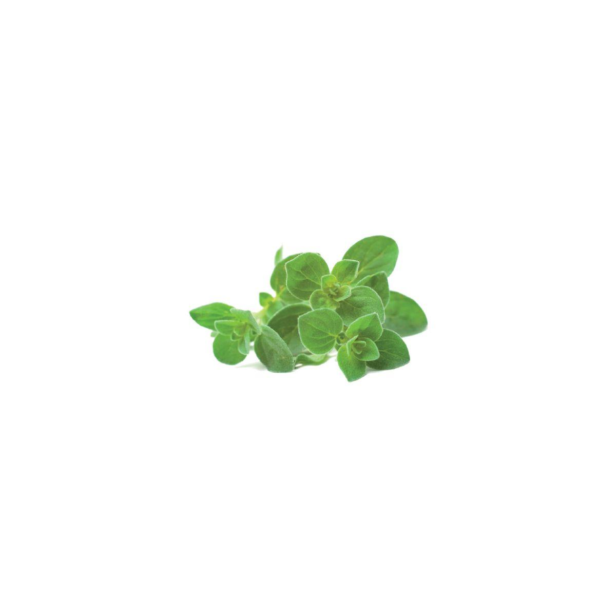 Recharge jardin int�rieur click and grow origan (lot de 3) - 10% de remise imm�diate avec le code : deal10 (photo)