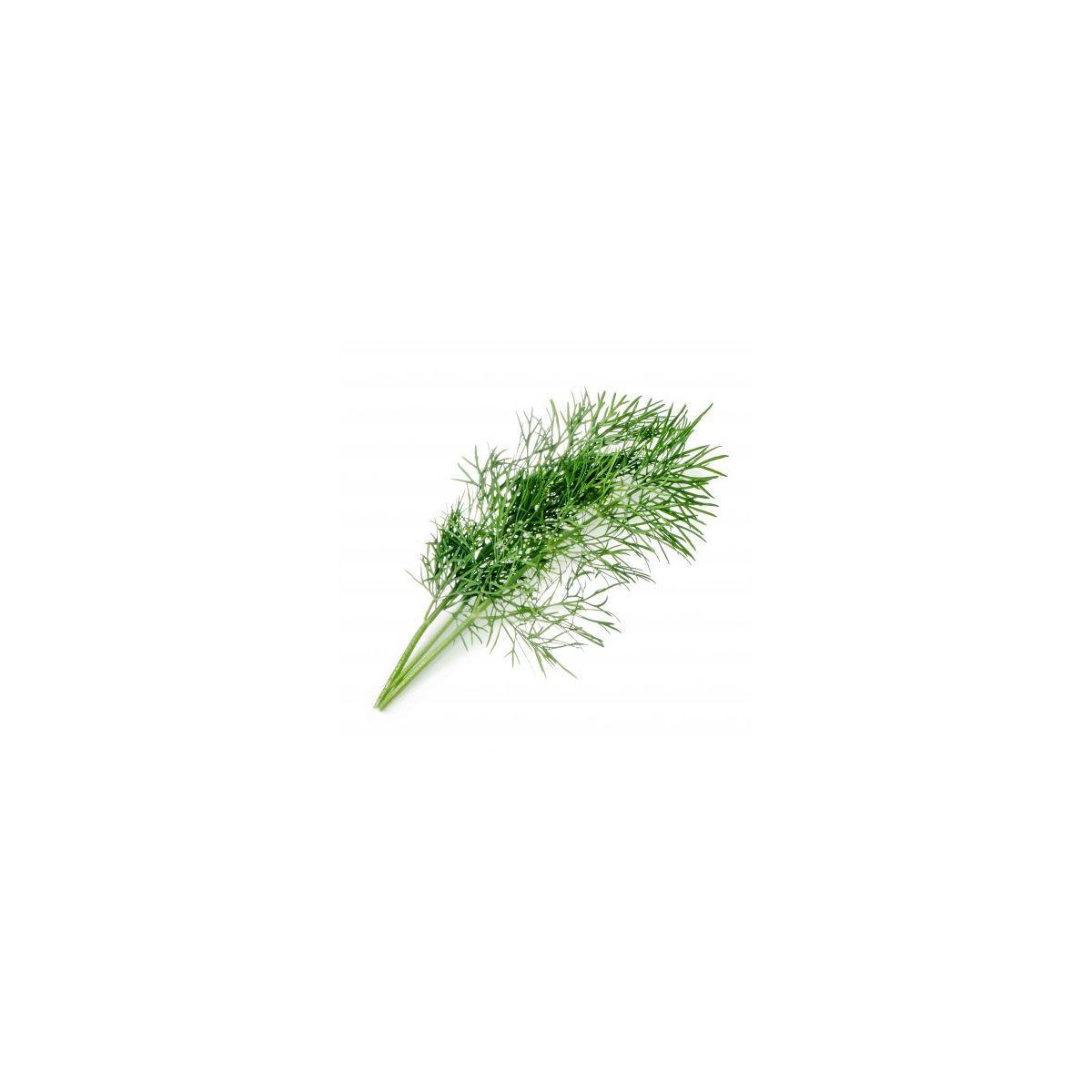 Recharge jardin int�rieur veritable aneth bio - 10% de remise imm�diate avec le code : deal10 (photo)