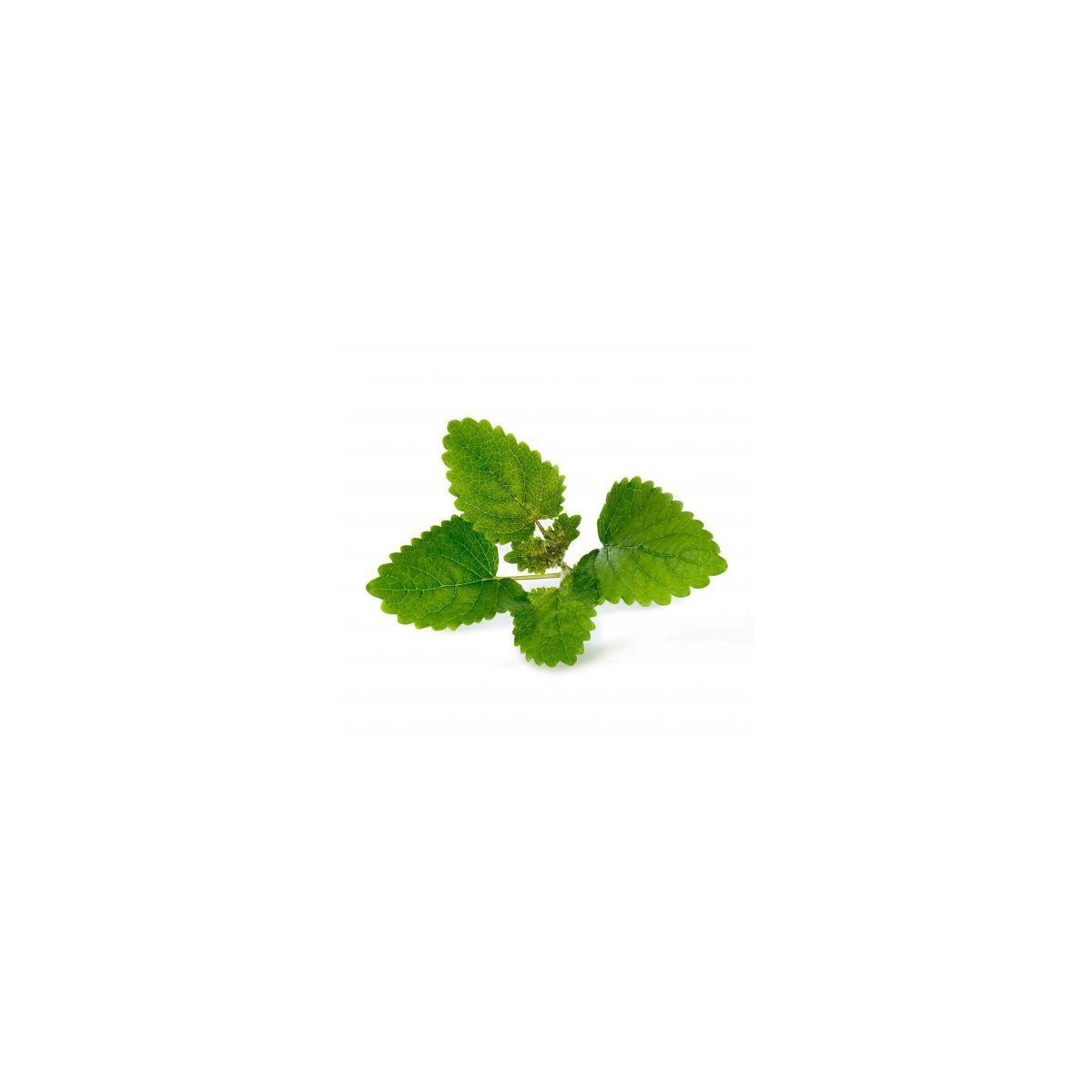 Recharge veritable melisse bio - 10% de remise imm�diate avec le code : automne10 (photo)