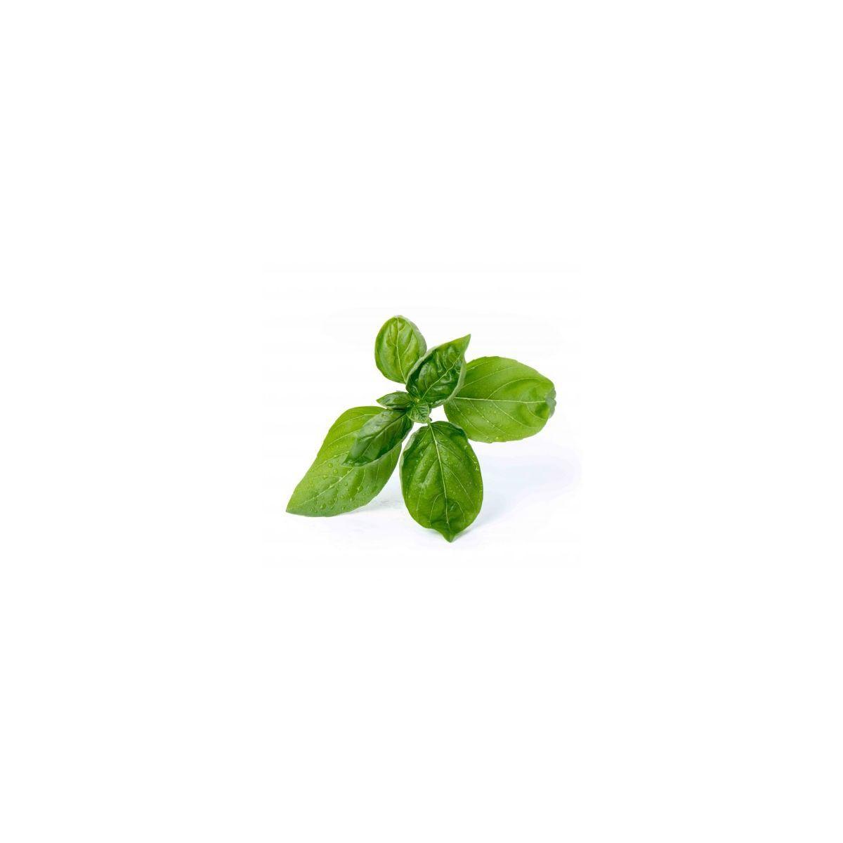 Recharge veritable basilic grand vert bio (photo)