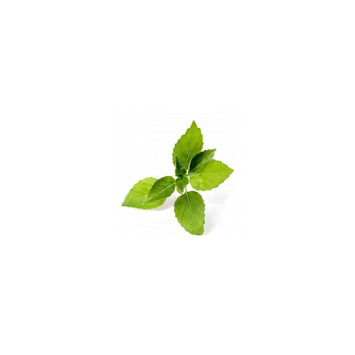 Recharge jardin int�rieur veritable basilic citron bio - 10% de remise imm�diate avec le code : deal10 (photo)