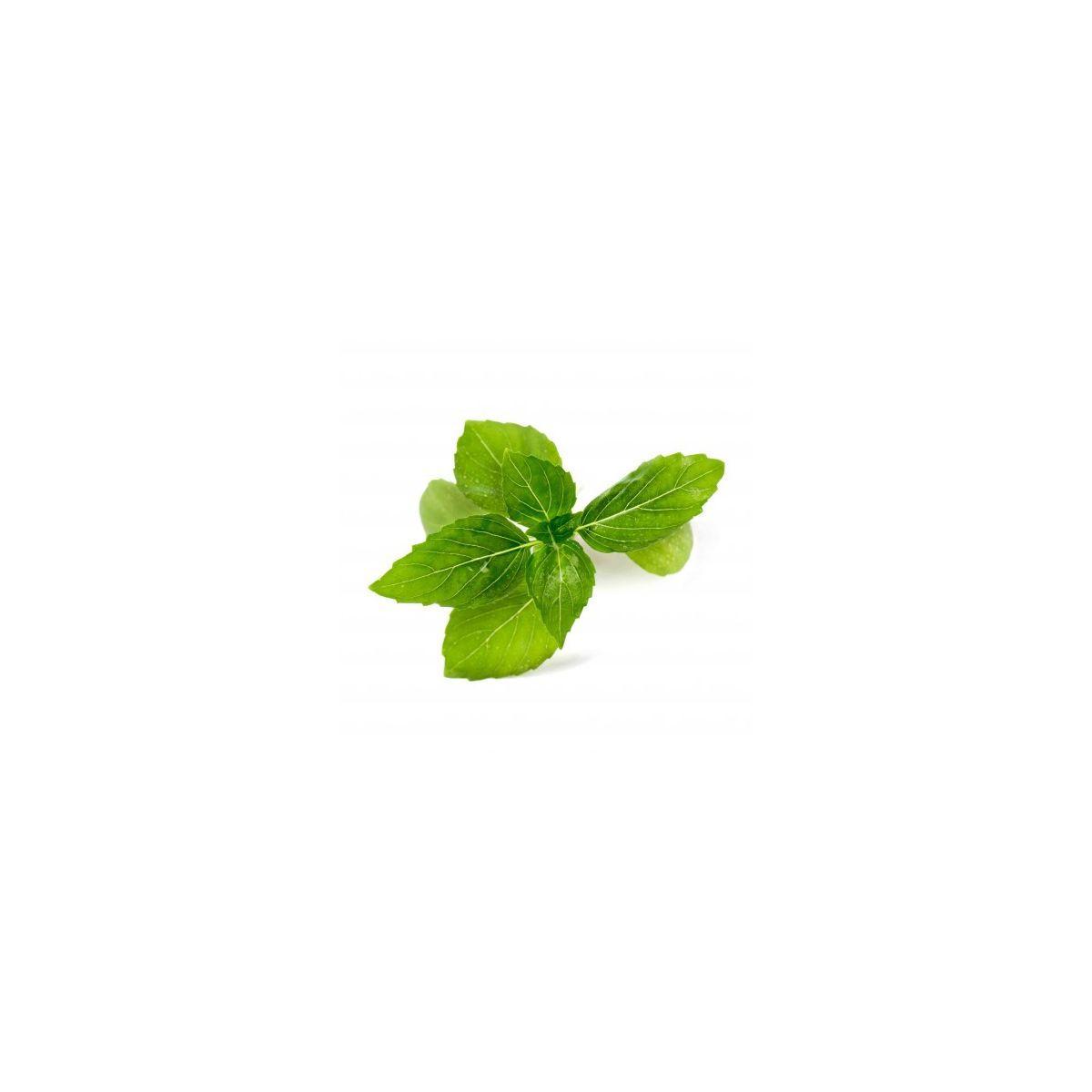 Recharge jardin int�rieur veritable basilic cannelle bio - 10% de remise imm�diate avec le code : deal10 (photo)