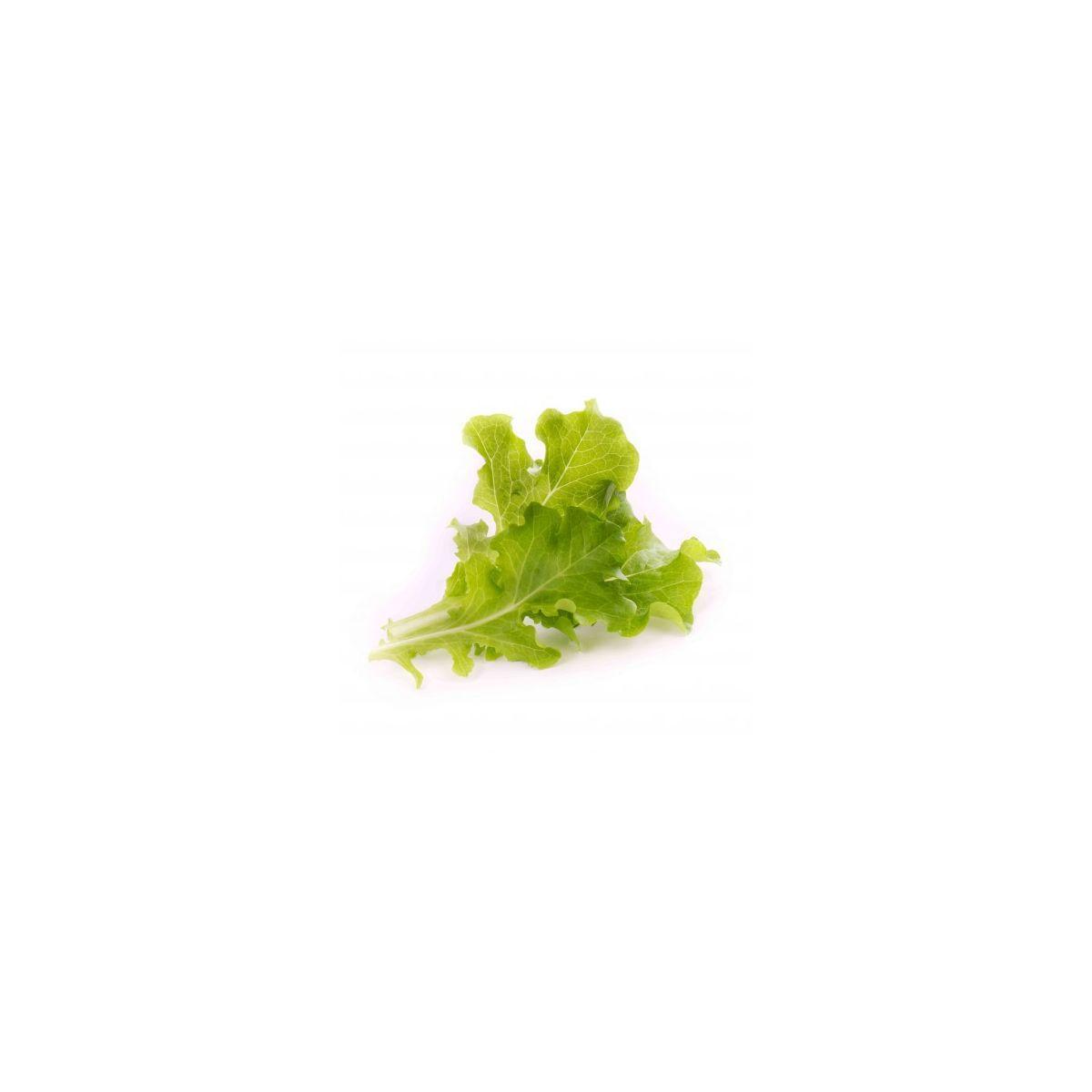 Recharge veritable feuilles de chene bio (photo)
