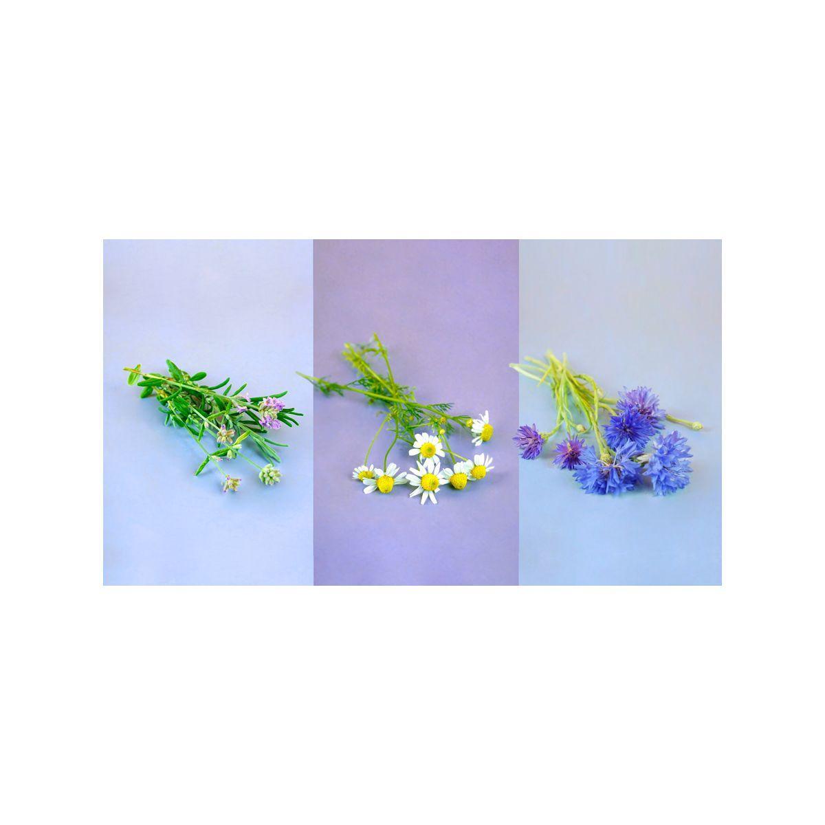 Recharge pret a pousser trio fleurs - camomille lavande bleuet - 5% de remise imm�diate avec le code : priv5 (photo)