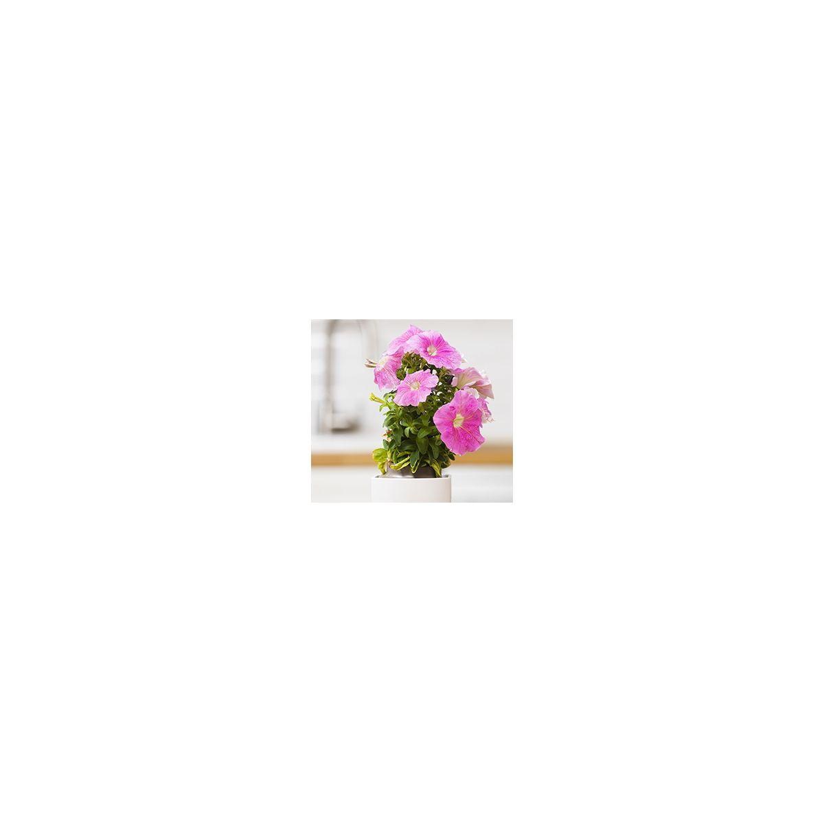 Recharge jardin int�rieur pret a pousser petunia (photo)