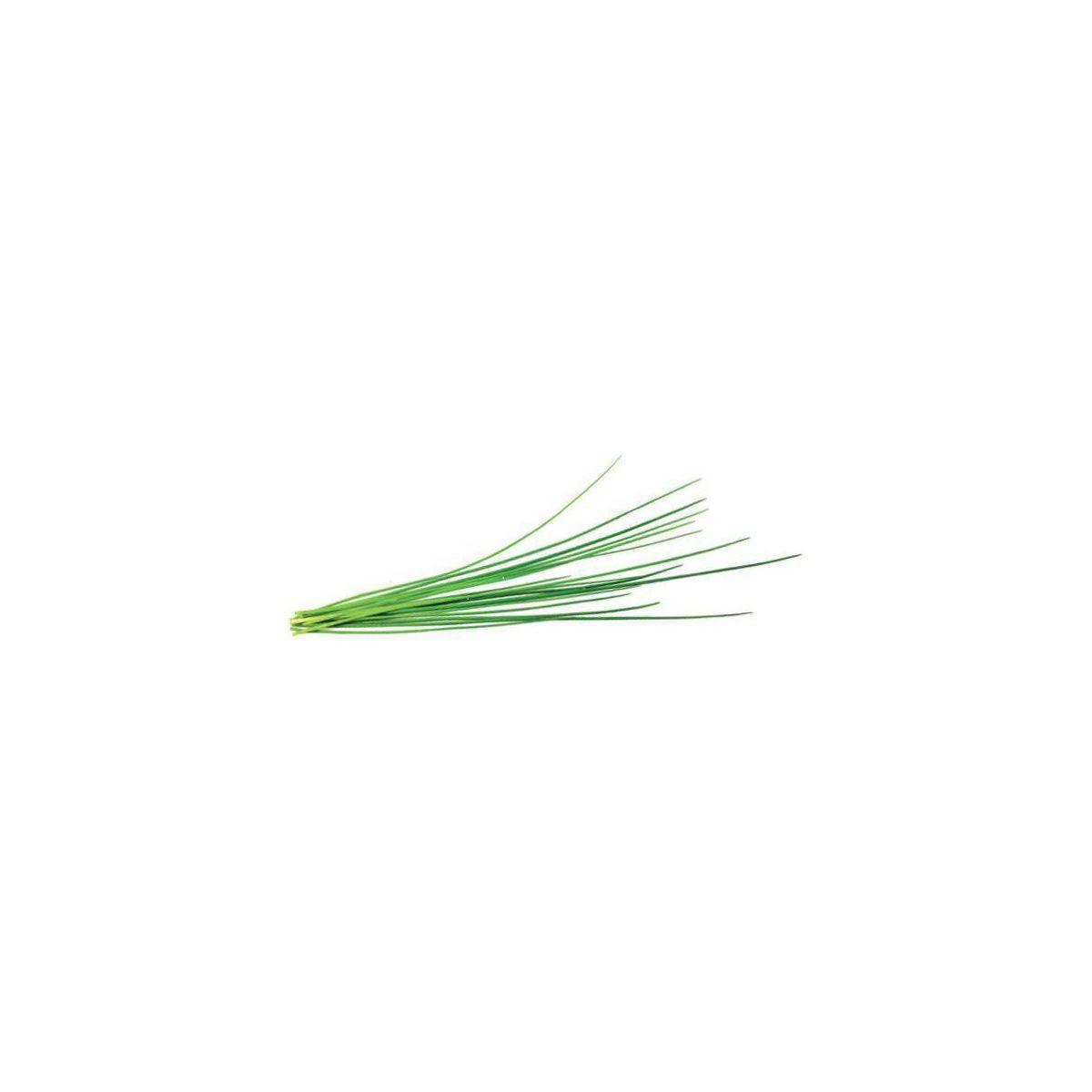 Recharge jardin int�rieur click and grow ciboulette lot de 3 (photo)