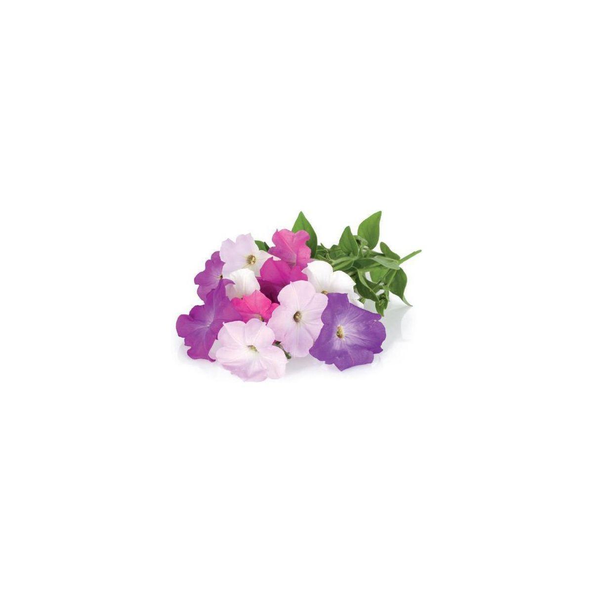 Recharge jardin int�rieur click and grow petunia lot de 3 (photo)